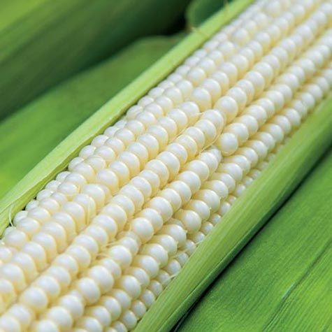 Trucker's Favorite White Dent Corn