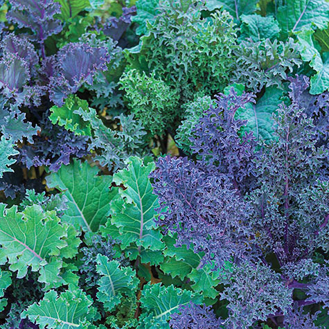 Gurney's<sup>&reg;</sup> Winter Wonderland Kale Mix