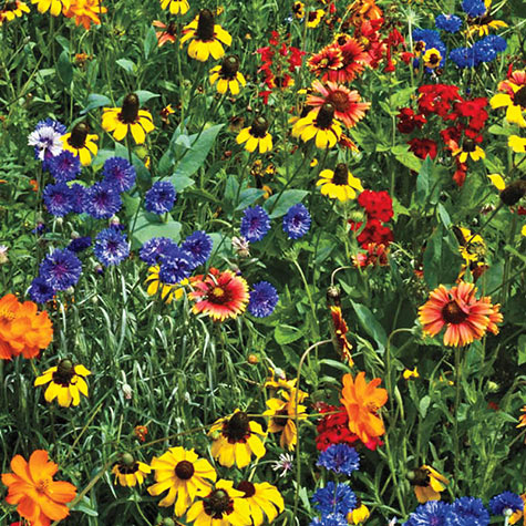 Southern Wildflower Mix
