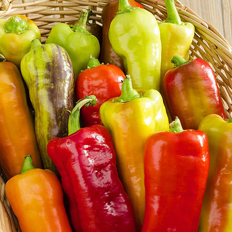 Gurney's ® Sweet Gold Hybrid Sweet Pepper