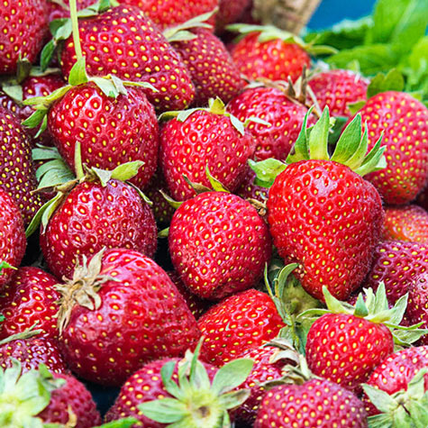 Honeoye Junebearing Strawberries
