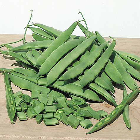 Roma II Bush Bean