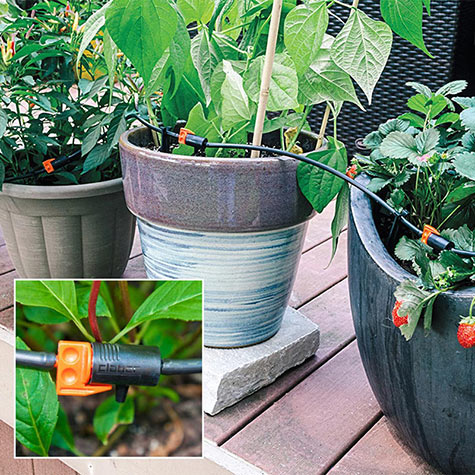 Drip Irrigation for Containers