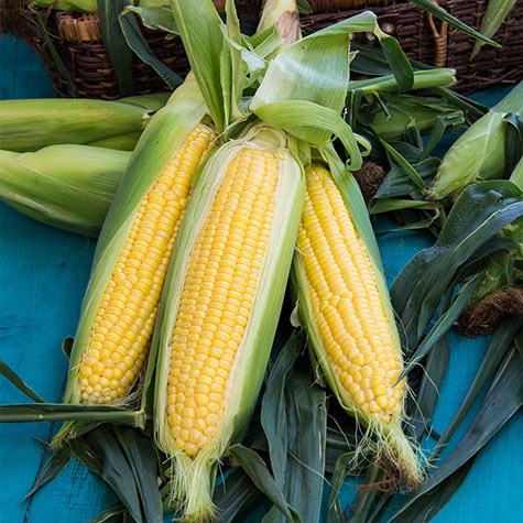 Honeygold Hybrid Sweet Corn (sh2)