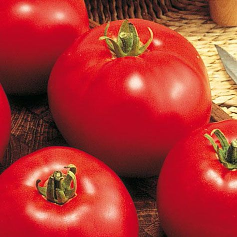 Improved Gurney Girl II (VFNT) Hybrid Tomato