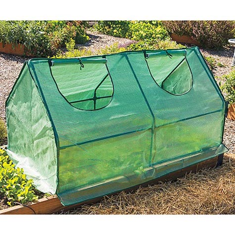 Multi Cloche Cold Frame
