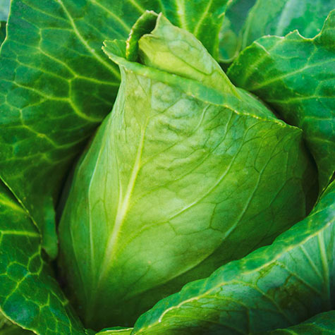 Sweetheart Lettage<sup>®</sup> Hybrid Tender Leaf Cabbage™