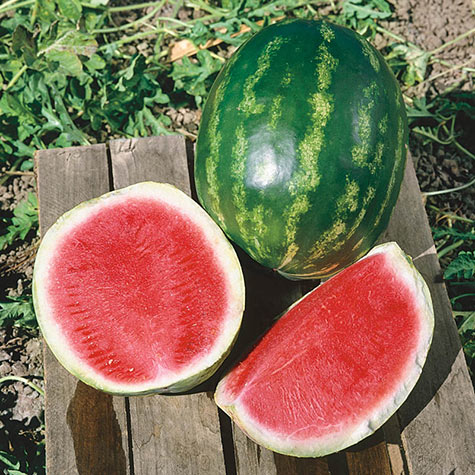 Triple Star Hybrid Watermelon