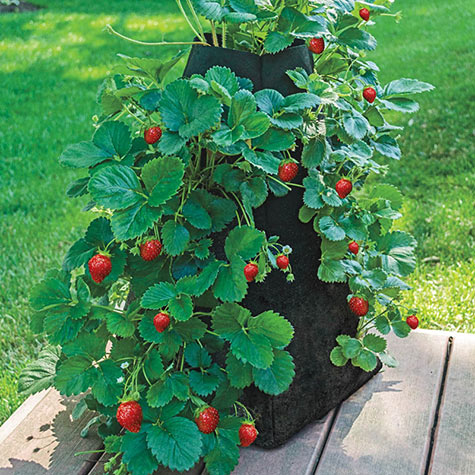 Grow Tub<sup>&reg;</sup> Strawberry Tower&trade;