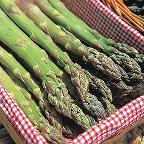 Jersey Supreme Asparagus