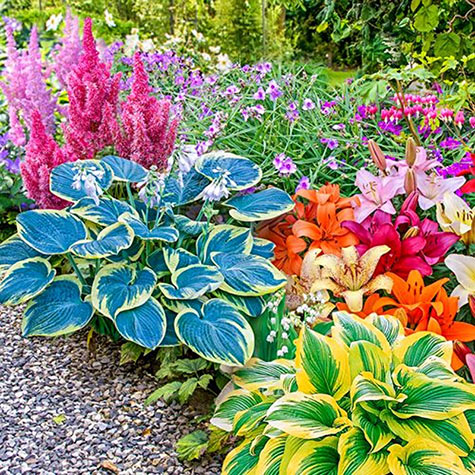 Perennials Shade Plants From Gurneyshostas And More