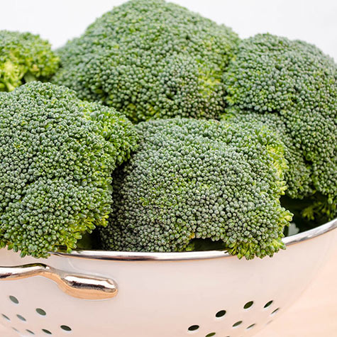 Green Magic Hybrid Broccoli