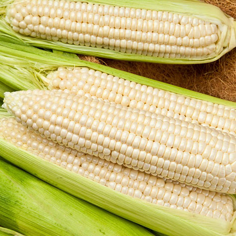 Gotta Have It<sup>®</sup> White Hybrid Sweet Corn