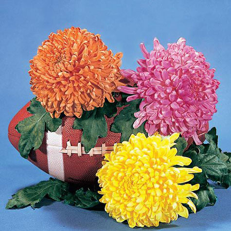 Giant Football Mum Mix