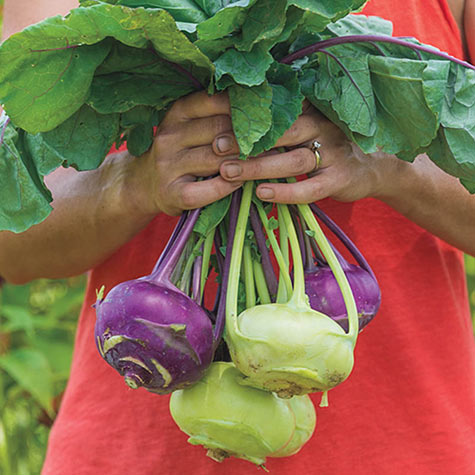 Sweetie Hybrid Kohlrabi Mix