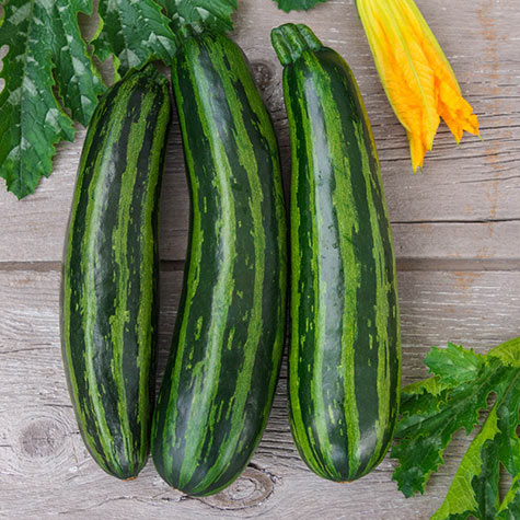 Green Tiger Hybrid Summer Squash
