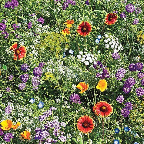 Gurney's<sup>&reg;</sup> Beneficial Bug Wildflower Mix