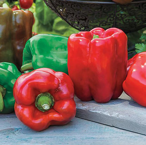 Gurney's<sup>&reg;</sup> Giant II Hybrid Sweet Pepper