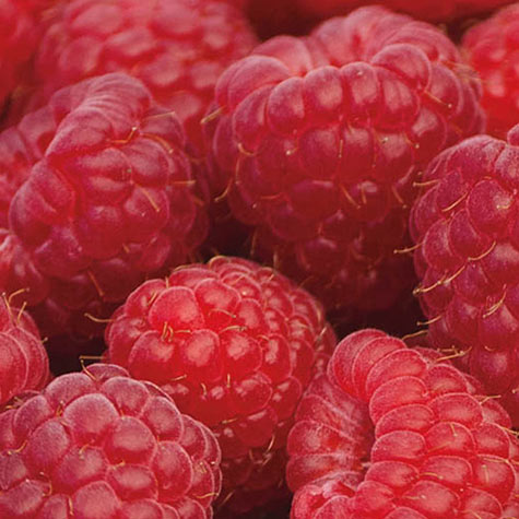 Sweet Repeat<sup>&trade;</sup> Red Raspberry