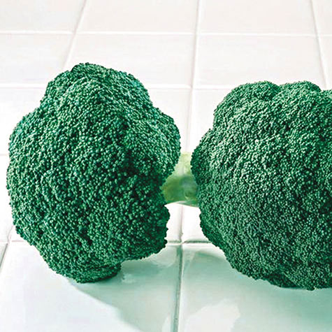 Destiny Hybrid Broccoli