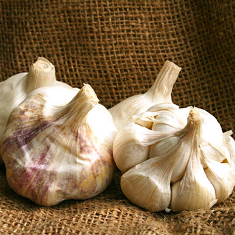 Inchelium Red Garlic
