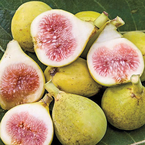 Peter's Honey Fig