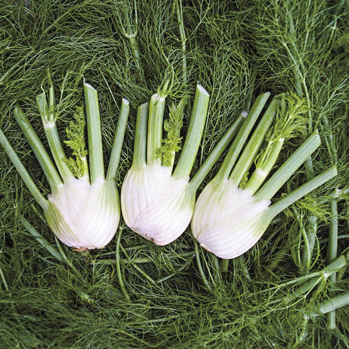 Fennel Orion Hybrid