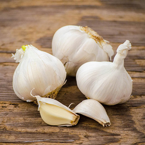 California White Softneck Garlic