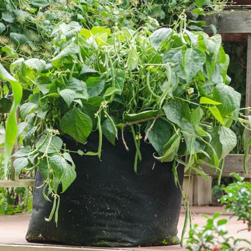 Grow Tub<sup>®</sup> 15 Gallon Garden Container