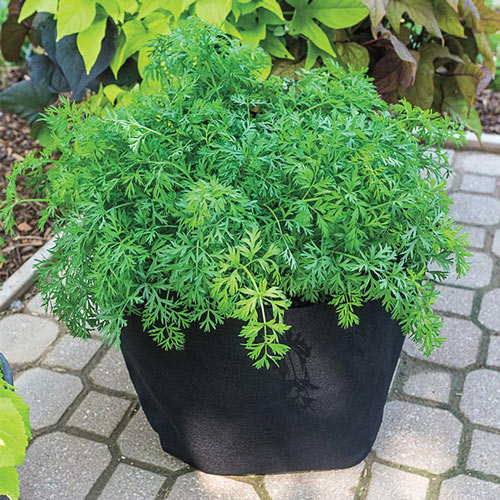Grow Tub<sup>®</sup> 10 Gallon
