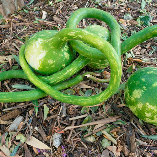 Long Handle Dipper Gourd