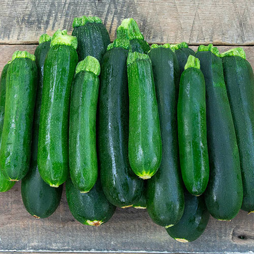 Green Star Hybrid Summer Squash Seed