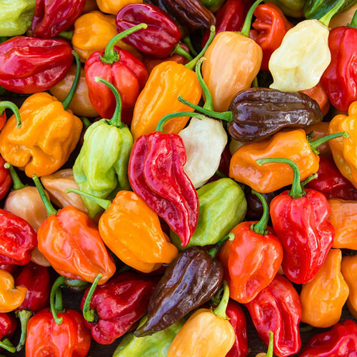 Flamethrower Mix Hybrid Hot Pepper