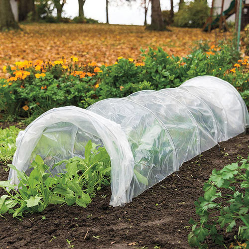 Polythene Grow Tunnel - Weather Protection
