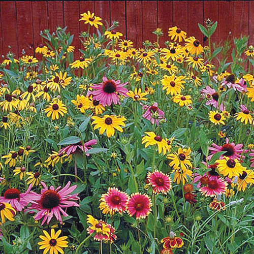 Native Perennial Wildflower Seed Mix