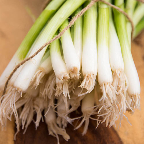 Evergreen White Bunching Onion Seed