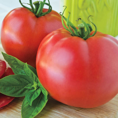 Pink Cadillac vff Hybrid Tomato