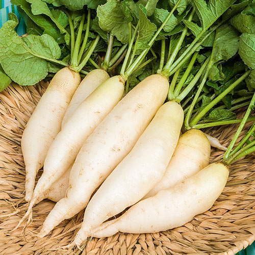 White Icicle Summer Radish Seed