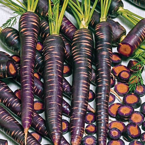 Purple Haze Hybrid Carrot