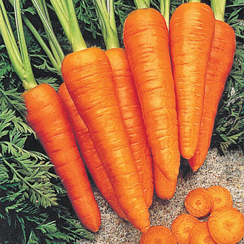 Fire Wedge Hybrid Carrot Seed