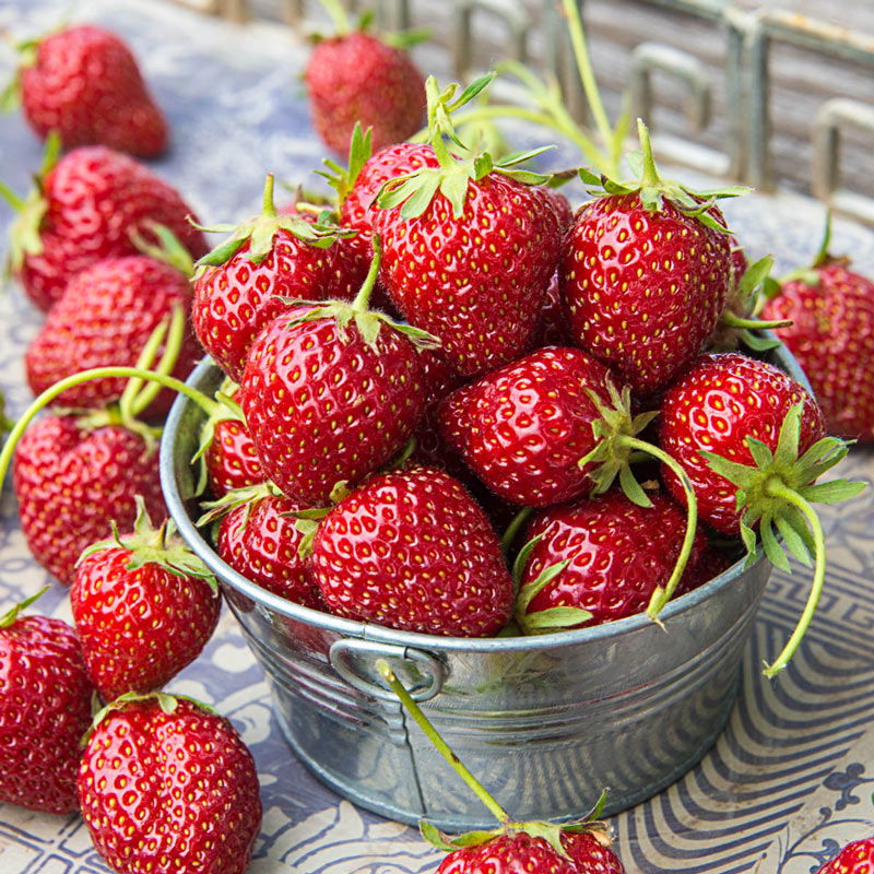 The 10 Best Vegetables And Fruits To Grow This Fall In: Mara Des Bois Everbearing Strawberry