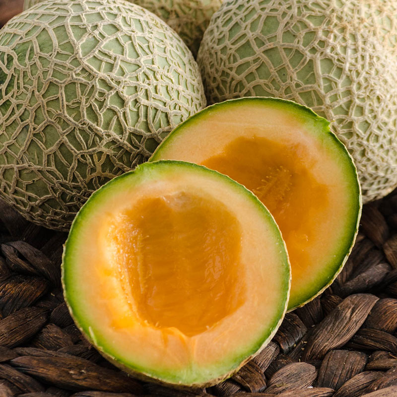 Sugar Cube Hybrid Cantaloupe Seeds Seed From Gurneys The researchers found that cantaloupe seed extract contains 3.6 percent protein, 4 percent fat and 2.5 percent carbohydrate, which is similar to the intestinal benefits. https www gurneys com product melon sugar cube hybrid