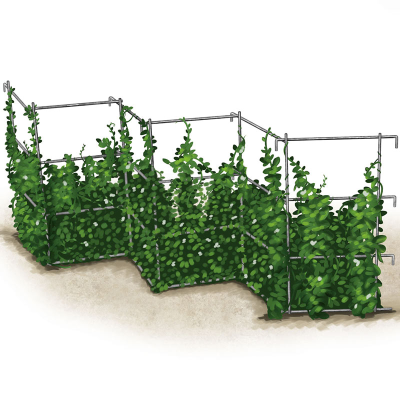 Pea Fence Gardening Supplies And Supports From Gurney S