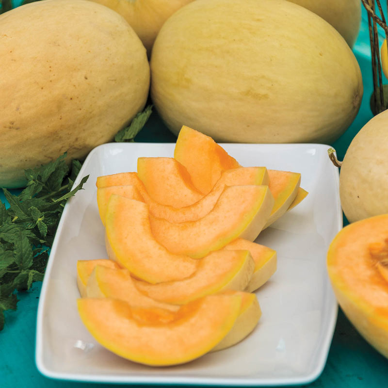 Papayadew Hybrid Cantaloupe Gurney S Seed Nursery Co You know exactly what i'm talking 5. https www gurneys com product papayadew hybrid