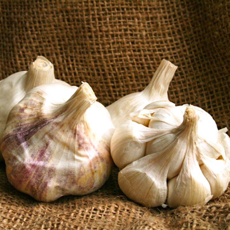 Inchelium Red Soft neck garlic bulbs per pound free shipping in lower 48