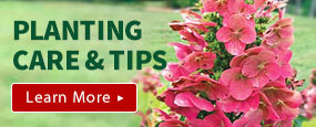 Gurney's Planting & Care Tips