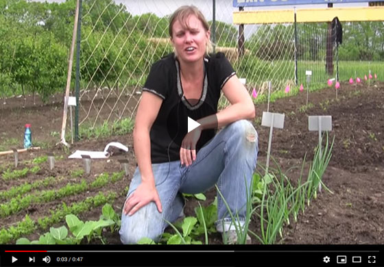 How to Grow Onions from Seed Video