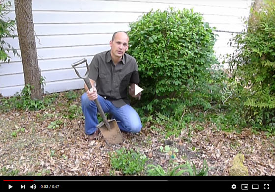 How to Plant Asparagus in a Landscape Bed Video