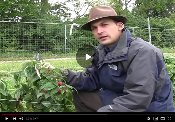 Primo Cane Raspberries Video