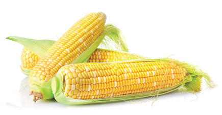 Gurneys Corns